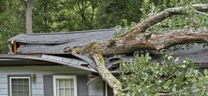 A large oak tree falls on and into a small house during a storm demolishing its roof